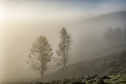 Backlit Prints - Summer Morning in Yellowstone Print by Sandra Bronstein