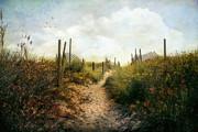 John Rivera - Summer Pathway