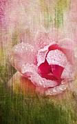 Summer Rose #2 Print by Betty LaRue