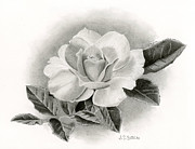 Hyper Realistic Drawings Prints - Summer Rose Print by Sarah Batalka
