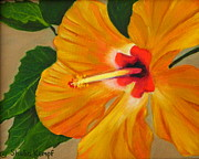 Raleigh Originals - Summer Special - Golden Glow - Hibiscus Flower by Shelia Kempf