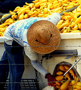 Straw Hats Photos - Summer Squash by Karen Wiles
