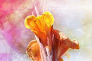 Canna Lily Mixed Media Posters - Summer Sunset Poster by Elaine Manley