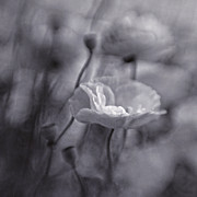 Blur Art - summer whispers III by Priska Wettstein