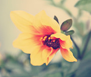 Flower Photographs Prints - Summer Yellow Print by Cathie Tyler