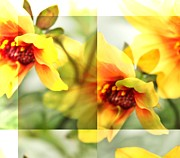 Yellow Flowers Posters - Summer Yellow Two Poster by Cathie Tyler