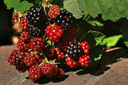 Blackberries Art - Summers Bounty by Donna Kennedy