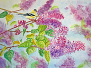 Finch Prints - Summertime Arrival II - Goldfinch and Lilacs Print by Kathryn Duncan