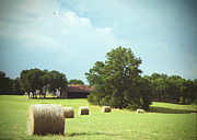 Old Tree Photographs Prints - Summertime  Hay Bales  Print by Ann Powell