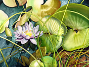 Water Lilies Posters - Summertime Poster by Lyse Anthony