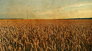 Cornfield Photos - Summertime by Sandra Roeken