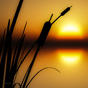 Golden Art - Summertime Whispers  by Bob Orsillo