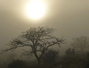 Sun And Tree Prints - Sun and Fog Print by Loree Johnson