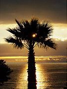 Joe Schofield - Sun and Palm and Sea