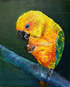 Parrot Print Paintings - Sun Conure by Art by Kar