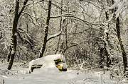 Winter Storm Prints - Sun-Dappled Logs After Nemo Print by Deborah Smolinske