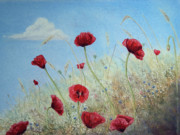 Red Poppies Pastels - Sun Drenched by Constance Widen