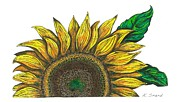 Pen And Ink Drawing Framed Prints - Sun Flower Framed Print by Karen Sirard