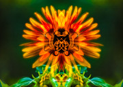 Yakima Valley Digital Art Prints - Sun Flower Rising Print by Omaste Witkowski
