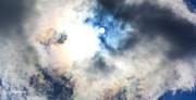 Michelle Wiarda - Sun Glow