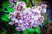 Environment Design Digital Art - Sun Lit Lilac The Sweet Sign Of Spring by Andee Photography