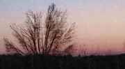 Photomanipulation Originals - Sun Rise With Tree by David Glotfelty