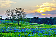 Bluebonnets Prints - Sun Setting on Another Texas Day Print by Katya Horner