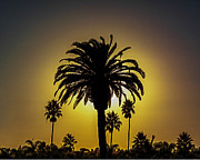 L J Oakes - Sun Setting Palms