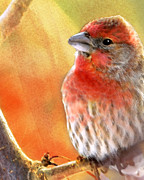 House Finch Prints - Sun Worshiper Print by Betty LaRue