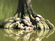 Making Memories Photography LLC - Sunbathing Turtles