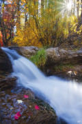 Oak Creek Posters - Sunburst Autumn Poster by Peter Coskun
