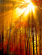Randall Branham Prints - Sunburst In The Forest Print by Randall Branham