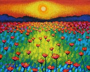 John  Nolan - Sunburst Poppies