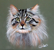 Cute Cat Pastels Prints - Sundancer Print by Ruth Jamieson