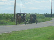 Amish Farms Photos - Sunday Afternoon Ride by Tina M Wenger