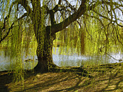 Weeping Willow Photos - Sunday In The Park by Madeline Ellis