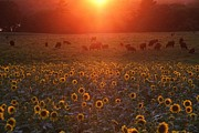 Sundown On Buttonwood Farm Print by Andrea Galiffi