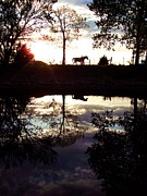 Lake Relections Prints - Sundown Solitude Horse Reflections  Print by Rebecca Overton