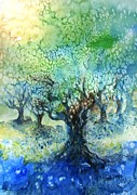 Italian Villas Paintings - Sundrenched Olive Grove   by Trudi Doyle