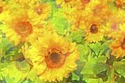 Sunflower 19 Print by Pamela Cooper