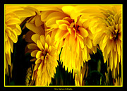 Avant Garde Photograph Acrylic Prints - Sunflower Abstract 1 Acrylic Print by Rose Santuci-Sofranko