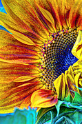 Textured Floral Posters - Sunflower Abstract Poster by Heidi Smith