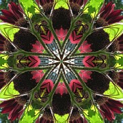 Trina's Kaleidoscopic Images