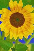 Deborah Benoit - Sunflower Art