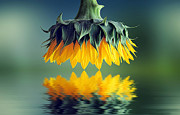Bess Hamiti - Sunflower