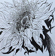 Strong Drawings Acrylic Prints - Sunflower Acrylic Print by Beverley Harper Tinsley