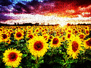 Bob Frase - Sunflower
