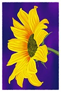 Britt Cagle - Sunflower