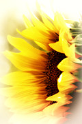 Gail Gates - Sunflower Burst