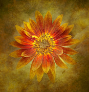 Kathy Rinker - Sunflower Burst